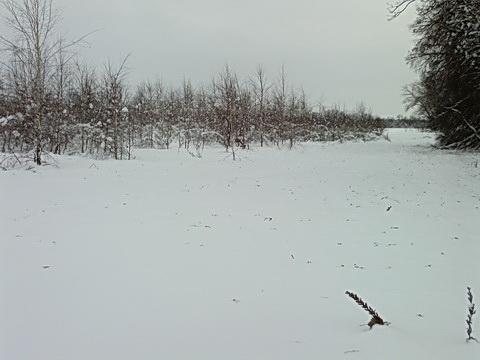 Березнячок возле лагеря.