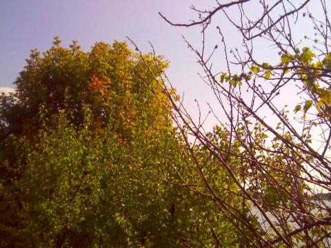 Просвет между деревьями, где было первое попадание.